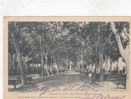 LAS PALMAS / GRAN CANARIA /  ALMEDA DE COLON   1902 - Gran Canaria
