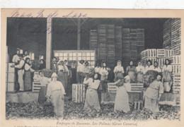 LAS PALMAS / GRAN CANARIA /  EMPAQUE DE BANANAS  1902 - Gran Canaria