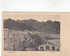 TENERIFE / ALAMEDA - Tenerife