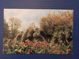 Russia. Chechen Republic - Chechnya. Groznyi Capital Lermontov Garden - Old Postcard 1972 - Chechnya