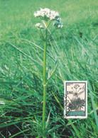 Lichtenstein -Heilpflanzen - Gebräuchlicher Baldrian - Heilpflanzen