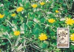 Lichtenstein - Heilpflanzen - Scharbockskraut - Heilpflanzen