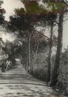CPSM Cavalaire-Route De Bar Porto    L198 - Cavalaire-sur-Mer