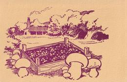 X éme Congrès International Sur La Science Et La Culture Des Champignons Comestibles - 5-15 Juin 1978 - Bordeaux - Funghi
