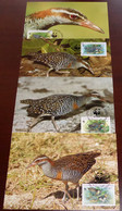 Cocos - 1992 - N°Yv. 251 à 254 - Oiseaux / WWF - Maxi Cards / Cartes Maxi - Non Classificati