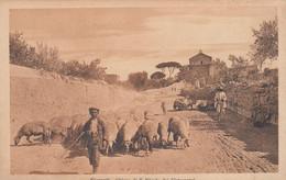 GIRGENTI-AGRIGENTO-CHIESA DI SAN NICOLA-PASTORELLO CON GREGGE-CARTOLINA NON VIAGGIATA -1915-1925 - Agrigento