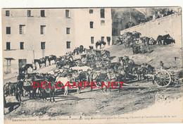 20 // SARTENE   Exposition De Chevaux Corses Selectionnés Pour Les Courses D'Auteuil Et L'amélioration De La Race - Sartene