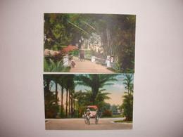 Couleur Malaisie Période Coloniale Penang Botanique Qualité - Malaysia