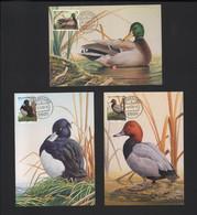 BUZIN / 3 CARTES MAX / SERIE CANARDS / LUXEMBOURG 2000 / OBLITERATION PREMIER JOUR - 1985-.. Pájaros (Buzin)