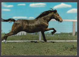 116496/ Cheval Au Galop - Paarden