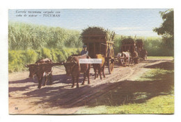 Tucuman, Argentina - Carreta Tucumana Cargada Cana De Azucar - Bullock Cart Loaded With Sugar Cane - Argentinië