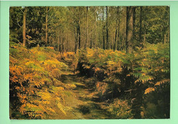 40----VISAGE DES LANDES--pins Et Fougères--voir 2 Scans - Unclassified