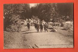 ZGB-10 RARE Mollendruz Désalpe Troupeau De Vaches Pour La Plaine. Cachet Bofflens 1920 Vers Romainmotier. Messaz Sepia - VD Vaud