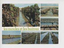 Gouville Sur Mer : Les Moules Et Les Huitres (métier Coquillage) Multivues - Other Municipalities