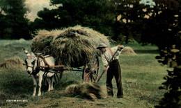 HAYMAKING  BURRO ANE DONKEY EZEL ESEL Donkeycollection - Esel