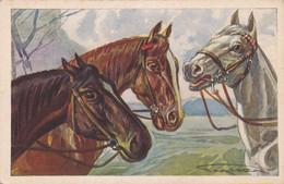Chevaux : Illustrateur -  à Identifier - : Trois Têtes De Chevaux : édit. DEGAMI N° 929 - Horses
