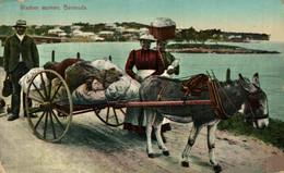 WASHER WOMEN BERMUDA ANE DONKEY EZEL ESEL MULES Donkeycollection - Esel