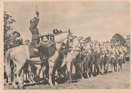 ORIGINAL WW2 POSTCARD - WAFFEN SS - War 1939-45
