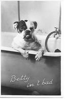 English Bulldog, Bouledogue Anglais, Englische Bulldogge, Dans La Baignoire, In Bathtub, In Der Badewanne - Hunde