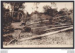 CPA Malaysia Typhoon At Rubber Estate - Malaysia