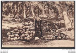 CPA Malaysia Husking Coconuts - Malaysia