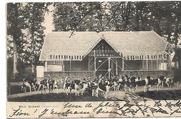 L130B460 - Bois Robert - Chasse à Courre - La Meute Devant Le Chenil - Carte Précurseur - Otros Municipios