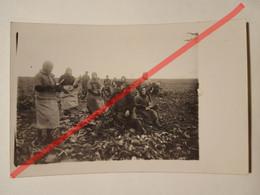 Photo Vintage. Original. Agriculture. Récolte Des Betteraves. Lettonie D'avant-guerre - Beroepen