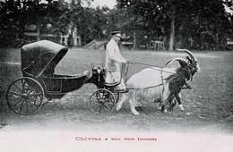 Chèvres à Cou Noir ( Suisse ) - Other