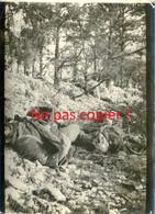 PHOTO FRANCAISE - CADAVRES PRES DU BOIS RAQUETTE SECTEUR DE SOUAIN - TAHURE MARNE 1915 - GUERRE 1914 1918 - 1914-18