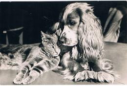 Chat Et Chien -cat And Dog -poes ,hond Met Lange Oren -katze Hund- - Chats