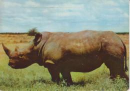 KENYA - Rhinocéros - Timbres UGANDA KENYA 1957 - Publicité Pharmacie - Kenya