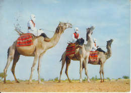 SAHARA OCCIDENTAL - Méharistes - Dromadaires - Timbre - Publicité Pharmacie - Western Sahara