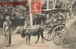 BULLOCK HACKERY COLOMBO CEYLON SRI-LANKA CEYLAN INDIAN ATTELAGE FIACRE ZEBU BUFFLE ETHNOLOGIE INDE INDIA - Sri Lanka (Ceylon)