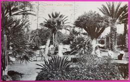Postal Jardin Las Palmas De Gran Canaria Rare Carte Postale Espagne - Gran Canaria