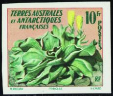 Terres Australes Non Dentelés N° 11 Chou De Kerguelen** - Non Dentellati, Prove E Varietà