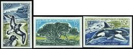 Terres Australes Non Dentelés N° 28 /30 Faune Et Flore 3 Valeurs** - Geschnitten, Drukprobe Und Abarten