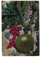 Monaco -- 1955 -- Le Jardin Exotique (coussin De Belle-mère Et Agave)..........timbre..............cachet.. - Jardín Exótico
