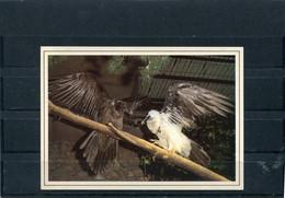 BEARDED VULTURE. - Vogels