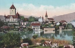 Schweiz - Spiez Am Thunersee - Ca. 1925 - BE Berne