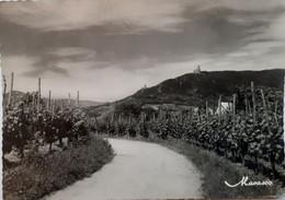 Les Ruines Du Ramstein Et Ortenbourg Vues Des Vignes De Scherwiller - Otros Municipios
