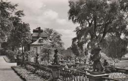 Frankfurt Höchst - Garten Im Bolongaro Palast - 1955 - Frankfurt A. Main