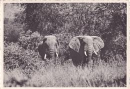 CONGO BELGE / BELGISCH KONGO / LAKE EDWARD / ELEPHANTS - Congo Belga - Otros