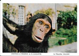 1971 - Château Et Réserve De St Augustin - Le Veurdre (Allier) Chita Le Chimpanzé - Monos