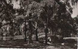 Frankfurt-Höchst - Partie Im Stadtpark - Ca. 1960 - Hoechst