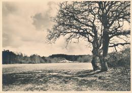 Nederland - 1946 - 5 Op 7,5 Cent Veth, Fotokaart Ommen, Diluviaal Landschap, Briefkaart G287h - Ongebruikt - Ganzsachen