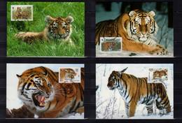 1993 Russia WWF Issue Siberian Tiger Panthera Tigris Altaica Set Of 4 Maxicards MiNr. 343 - 346  Cats Of Pray Animals - Cartoline Maximum