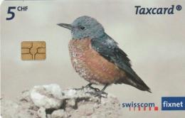 SUIZA. Aves, Birds. Steinrötel - Monticola Saxatilis. 05/08. 200000 Ex. (126) - Otros