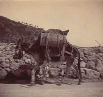 1898 Photo Un âne Route De La Corniche Du Bas Barrique Alpes Maritimes - Places