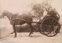 Photo Albumine (9 X 13 Cm) - Attellage - Cheval - Famille (Ca 1900-1910) - Ancianas (antes De 1900)