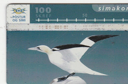 Iceland - Bird  - ICE-D-14 - Iceland